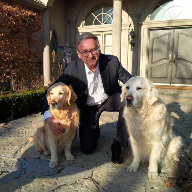 Cachorros Advogado Paul